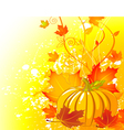 Autumn pumpkin background vector