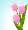 Bunch of tulips vector