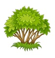 Bush with green leaves vector