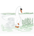 Swan-on-the-shore-of-lake vector