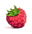 Ripe raspberry vector