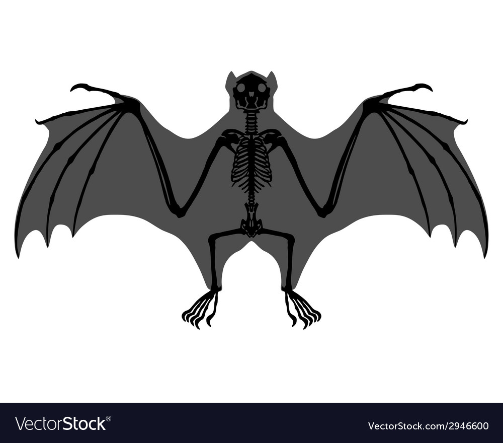 Bat skeleton vector | Price: 1 Credit (USD $1)