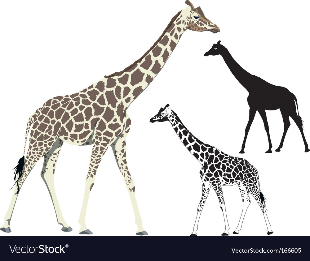 Walking giraffe vector | Price: 1 Credit (USD $1)