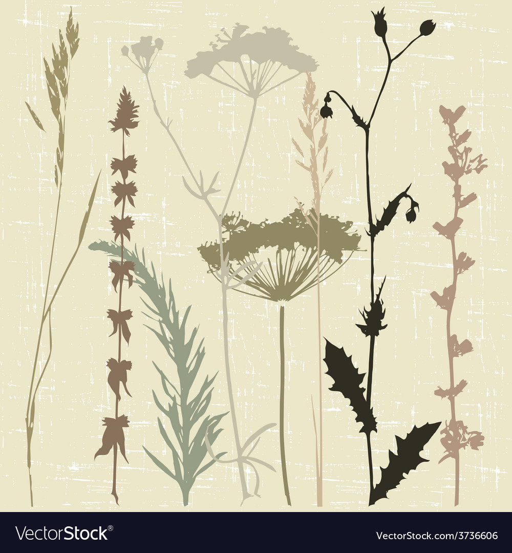 Herbal deadwood vector | Price: 1 Credit (USD $1)