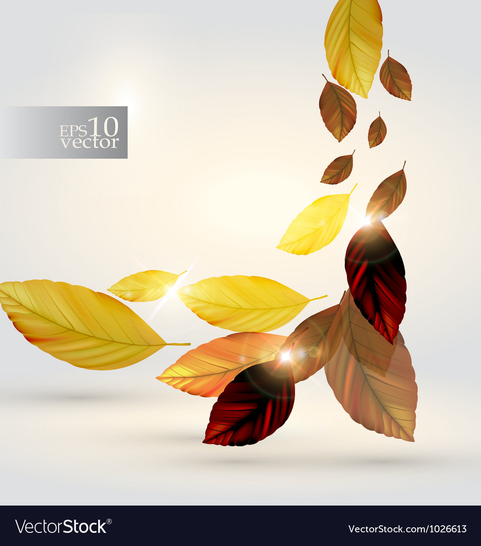 Autumn leaves design vector | Price: 1 Credit (USD $1)