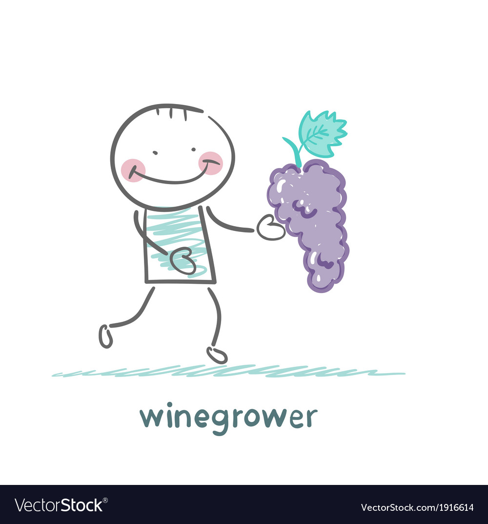 Winegrower holds a bunch of grapes vector | Price: 1 Credit (USD $1)
