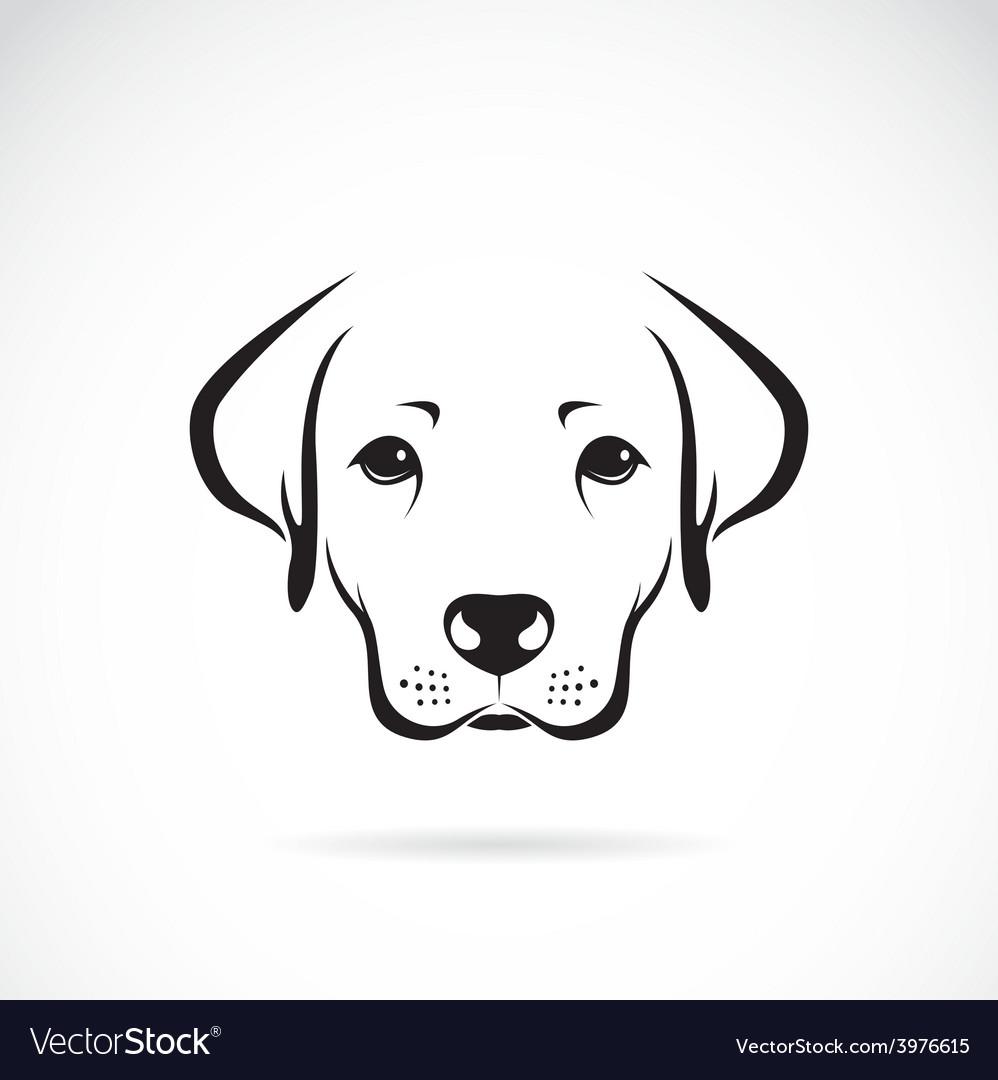 Image of an dog labrador vector