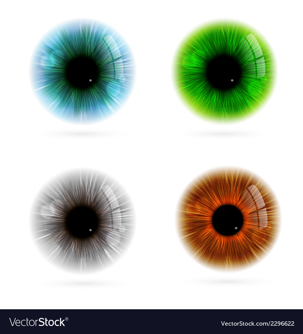 Human eye color vector | Price: 1 Credit (USD $1)