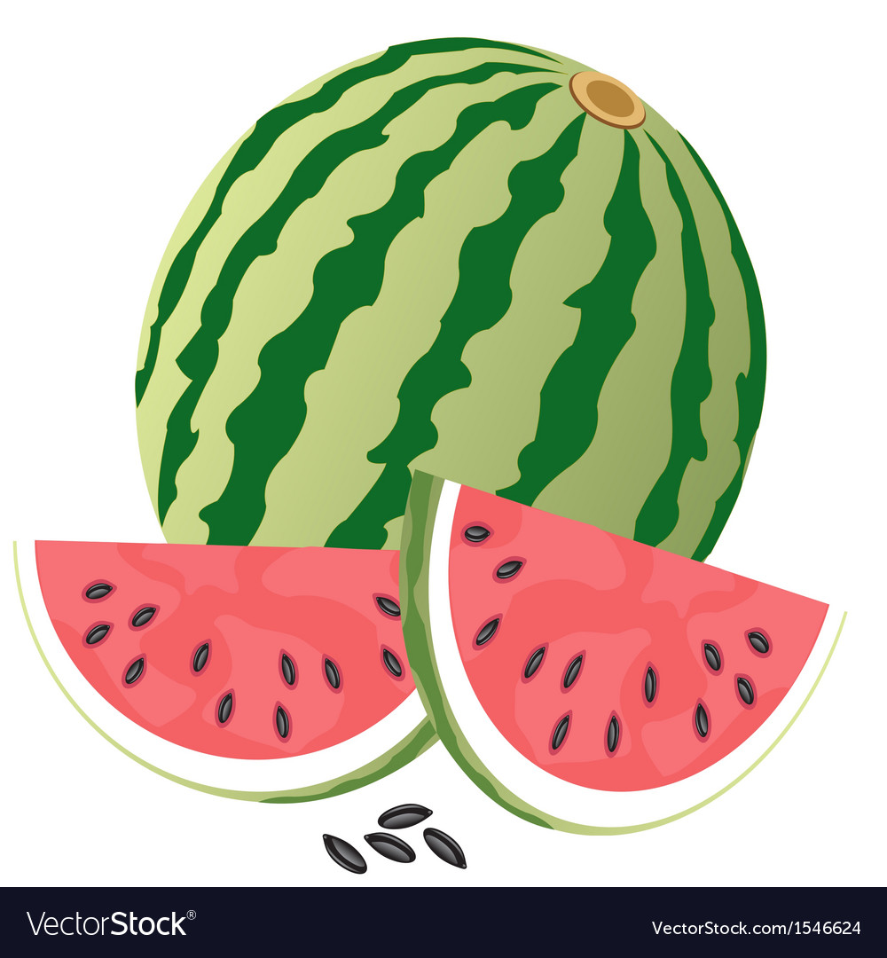 Ripe watermelon vector | Price: 1 Credit (USD $1)
