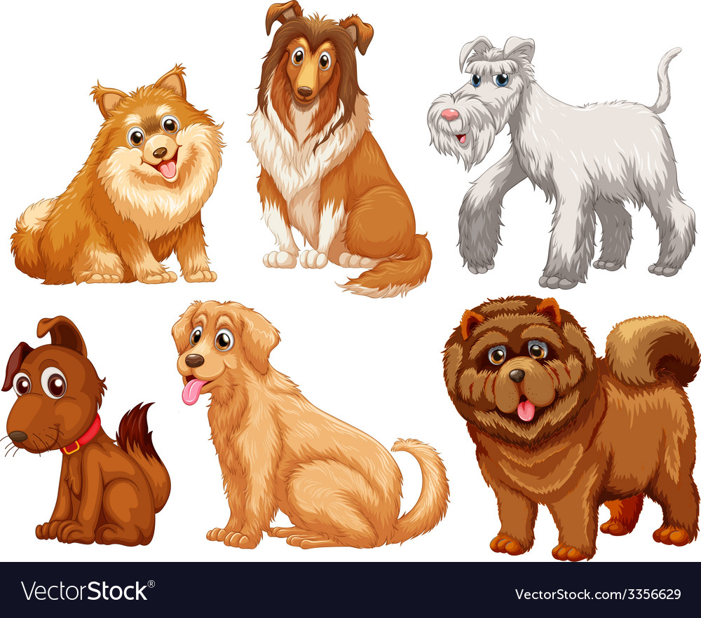 Different species of dogs vector | Price: 3 Credit (USD $3)