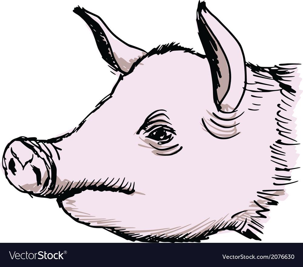 Pig vector   Price: 1 Credit (USD $1)
