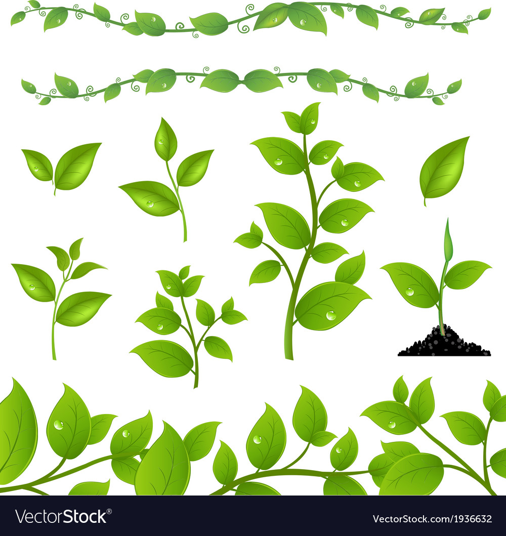 Set leaves vector | Price: 1 Credit (USD $1)