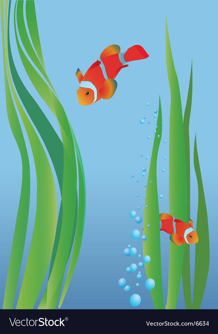 Anemone fish vector | Price: 1 Credit (USD $1)