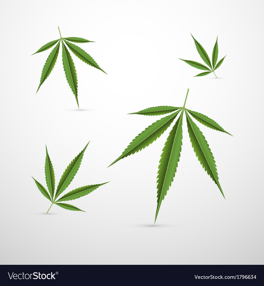Medical cannabis leaves isolated on white vector | Price: 1 Credit (USD $1)