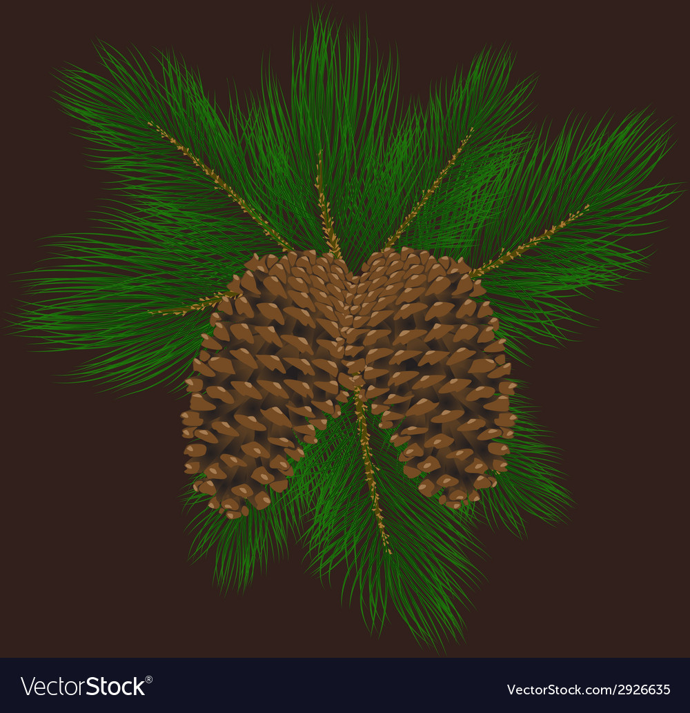 Llustration of pine cones with pine needles vector | Price: 1 Credit (USD $1)