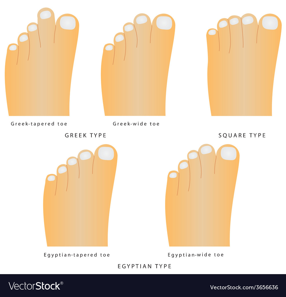 Toe shape vector | Price: 1 Credit (USD $1)