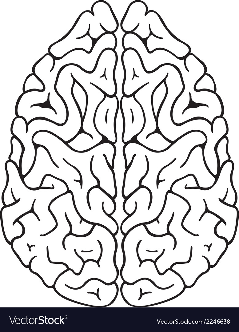 Brain top vector | Price: 1 Credit (USD $1)