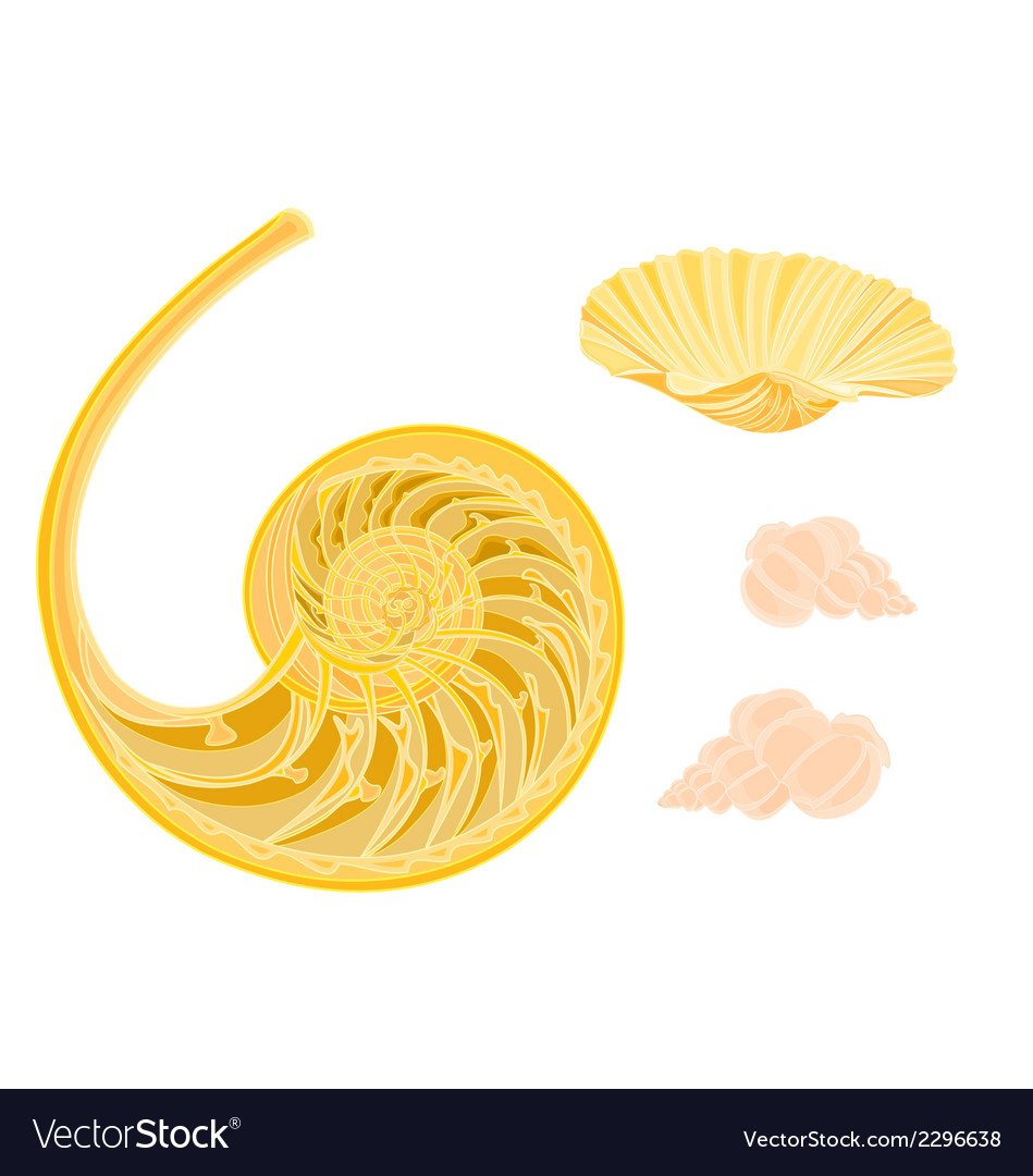 Collection marine life seashells vector | Price: 1 Credit (USD $1)
