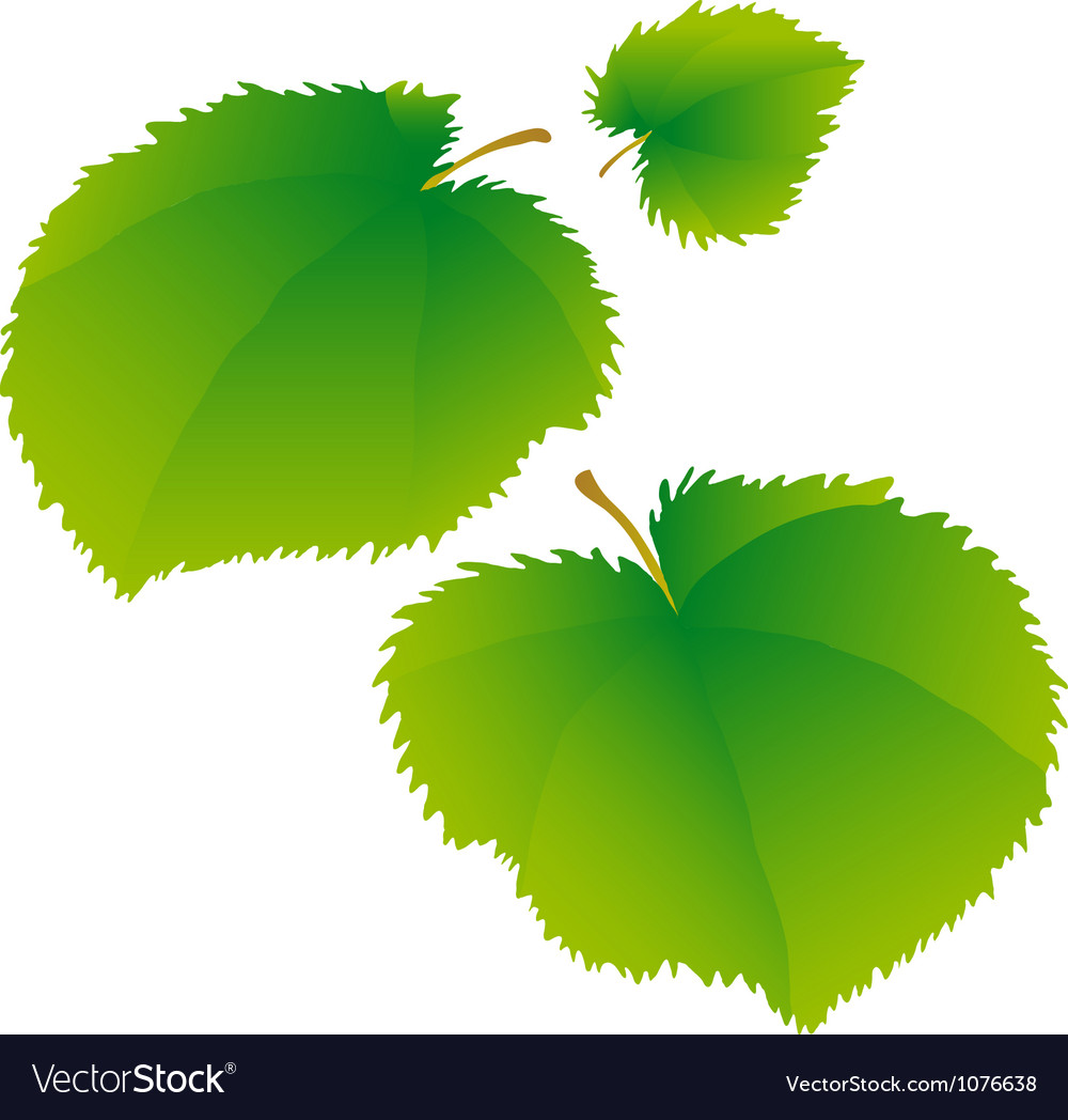 Lime leaves vector | Price: 1 Credit (USD $1)