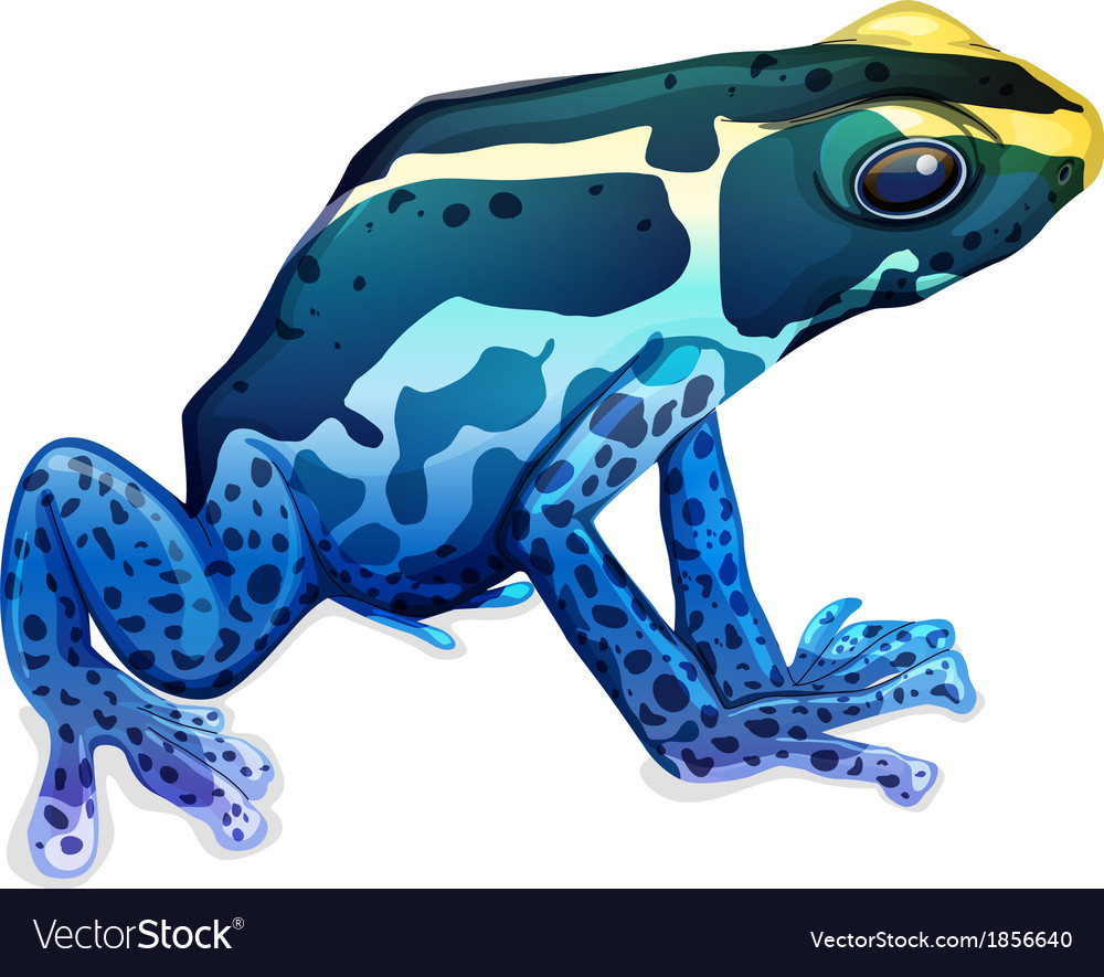 Poison dart frog vector | Price: 1 Credit (USD $1)