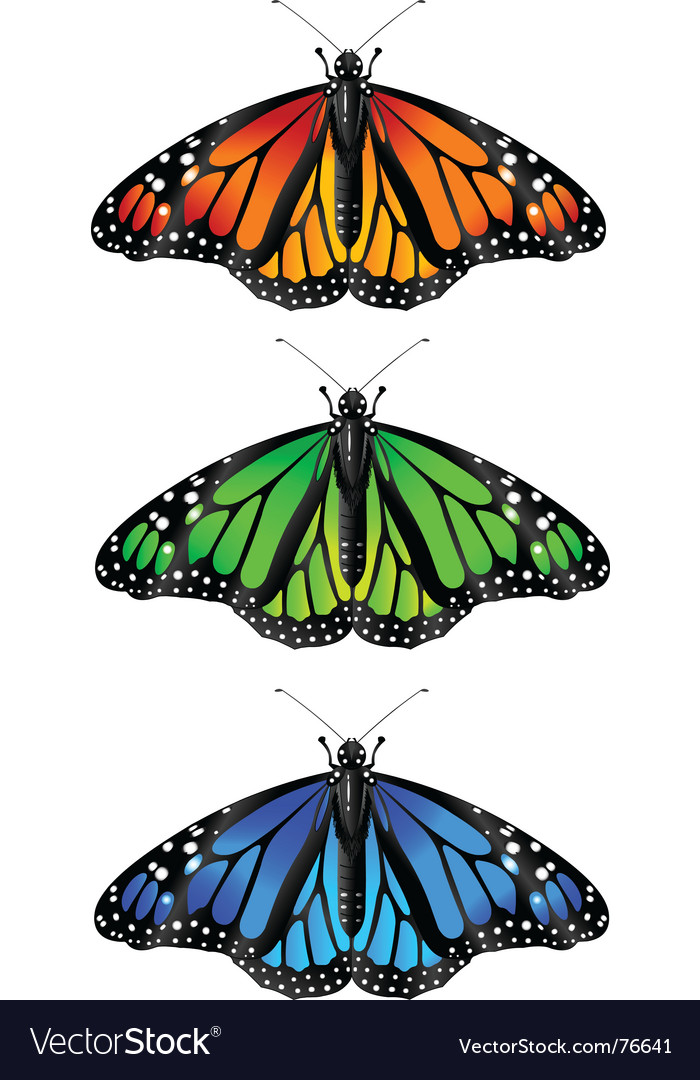 Monarch butterfly vector | Price: 1 Credit (USD $1)