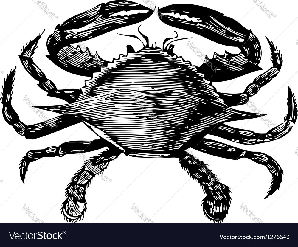Blue crab engraving vector | Price: 1 Credit (USD $1)