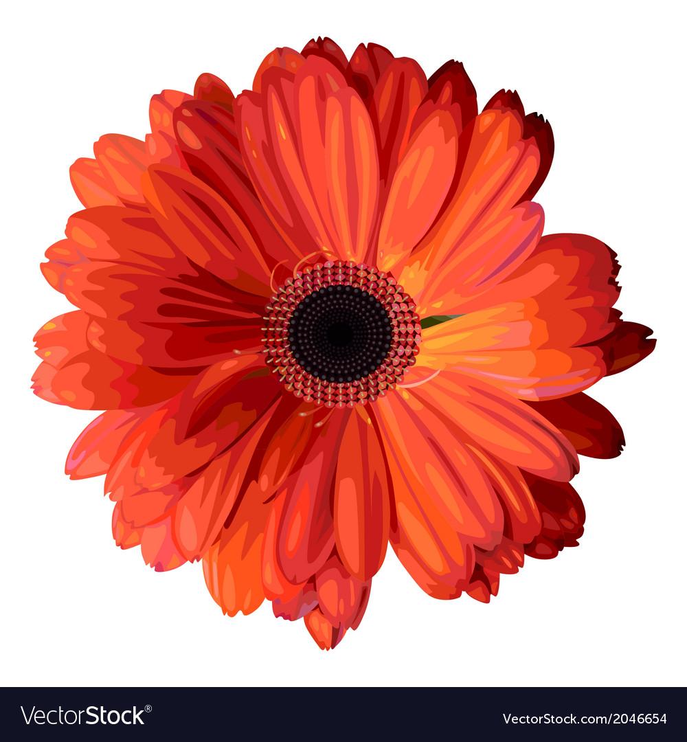 Orange gerbera vector | Price: 1 Credit (USD $1)