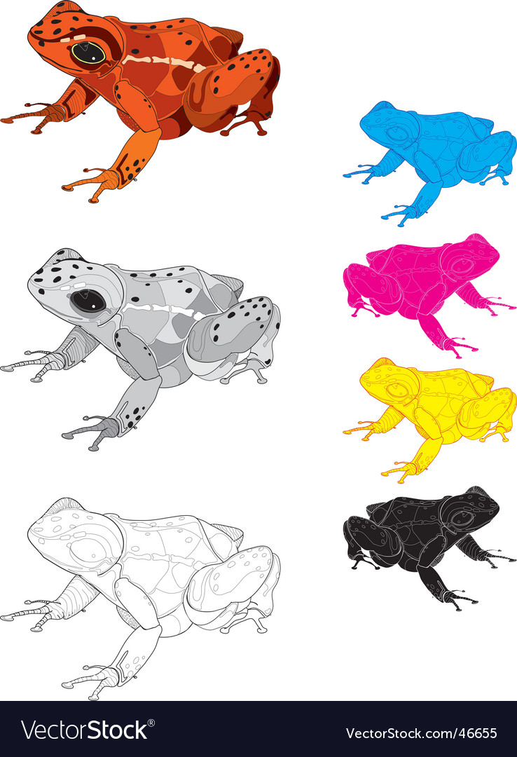 Dart frog vector | Price: 1 Credit (USD $1)