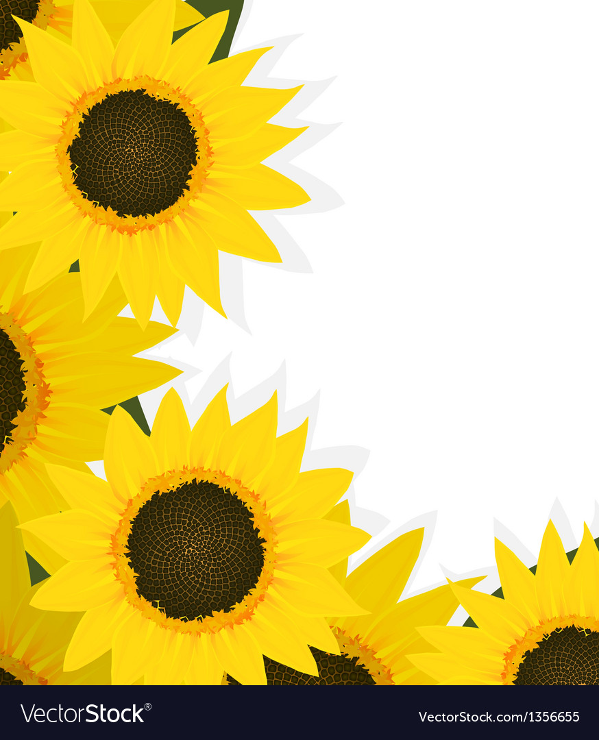 Sunflowers corner vector | Price: 1 Credit (USD $1)
