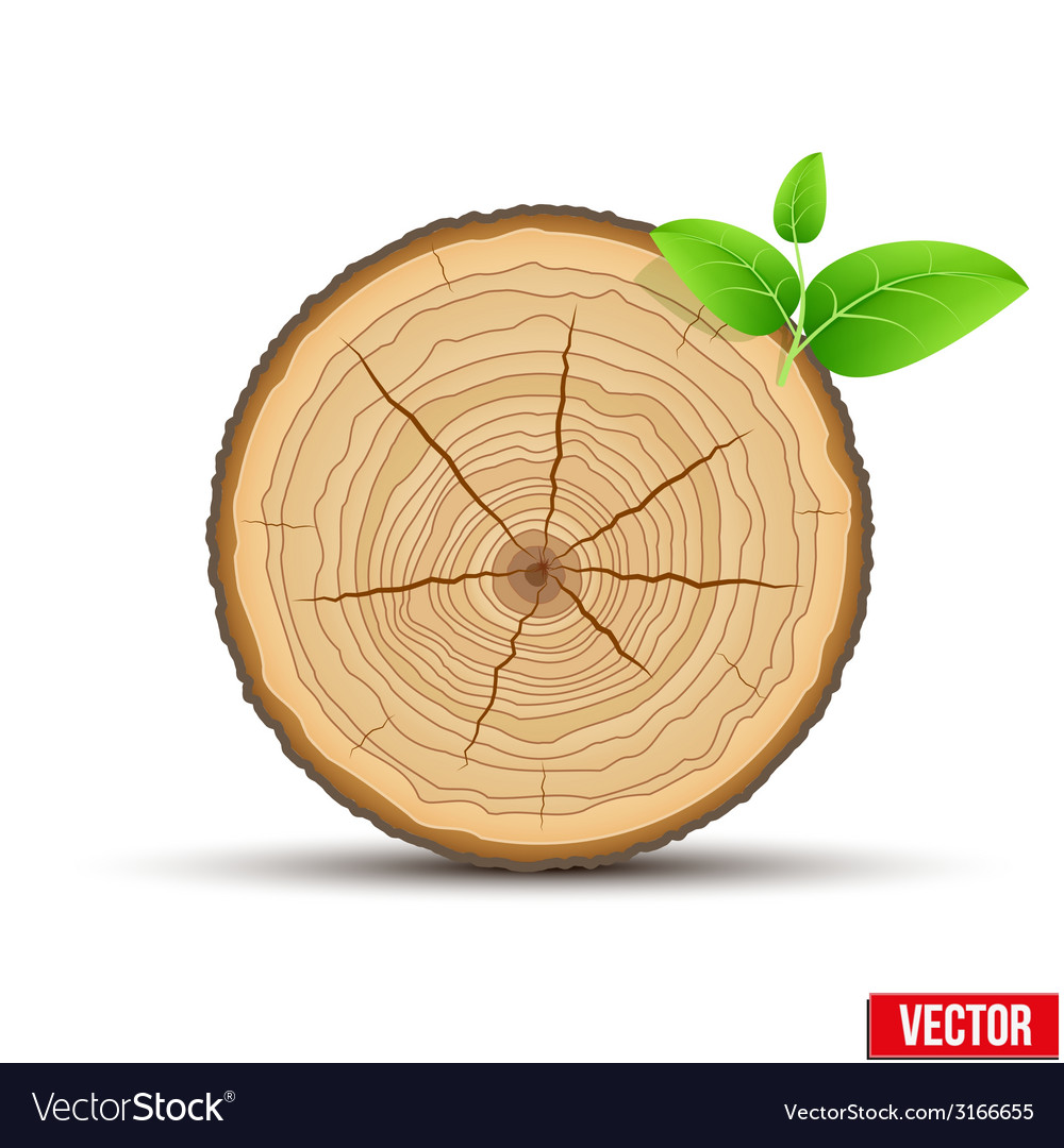 Wood cross section of tree trunk with green leaves vector | Price: 1 Credit (USD $1)