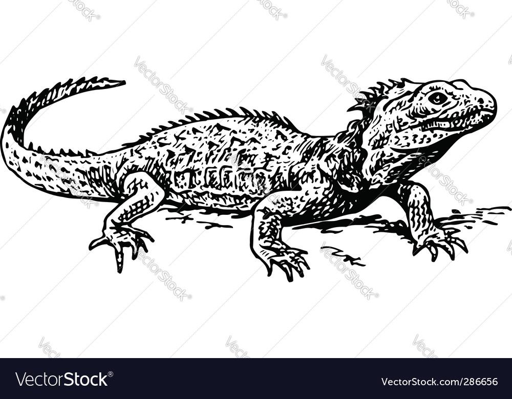 A tuatara sphenodon vector