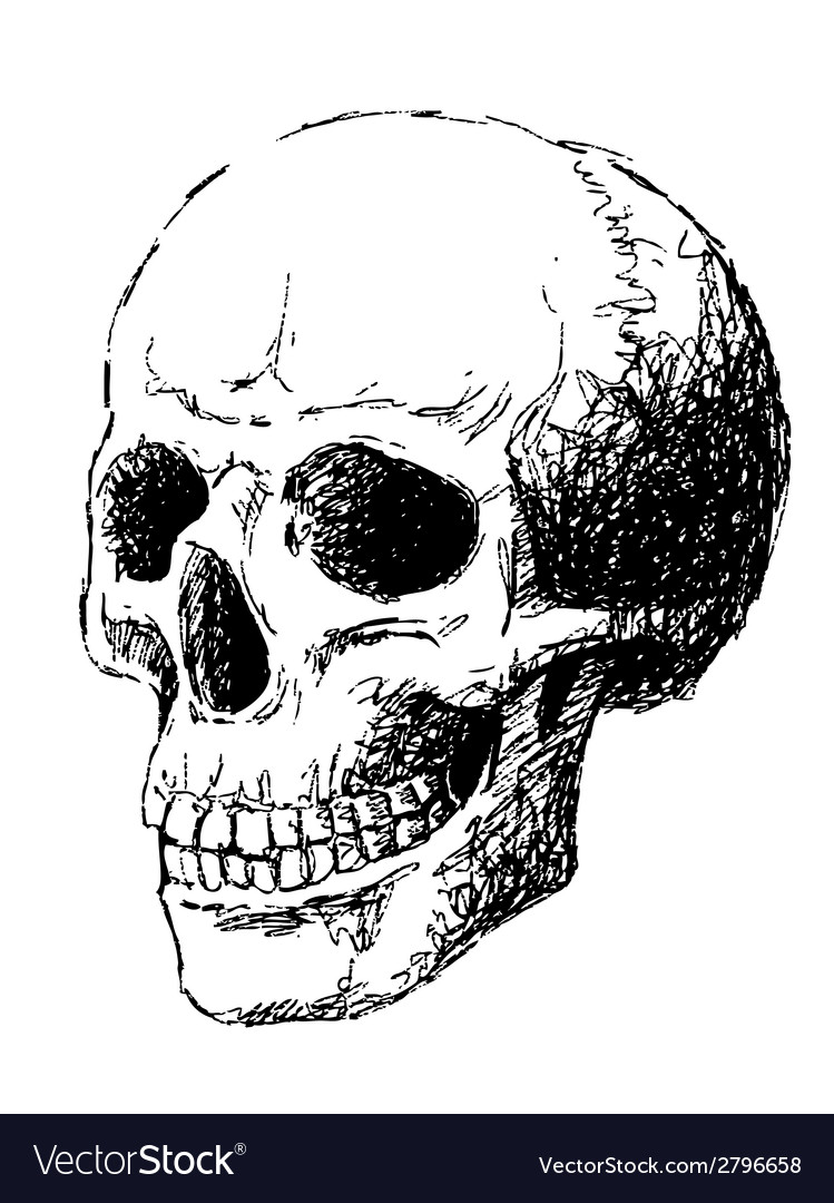 Side view of skull vector | Price: 1 Credit (USD $1)