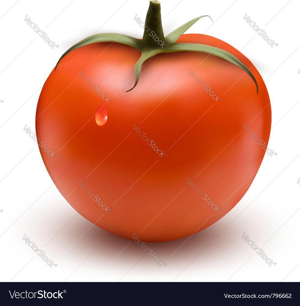 Fresh tomato vector | Price: 1 Credit (USD $1)