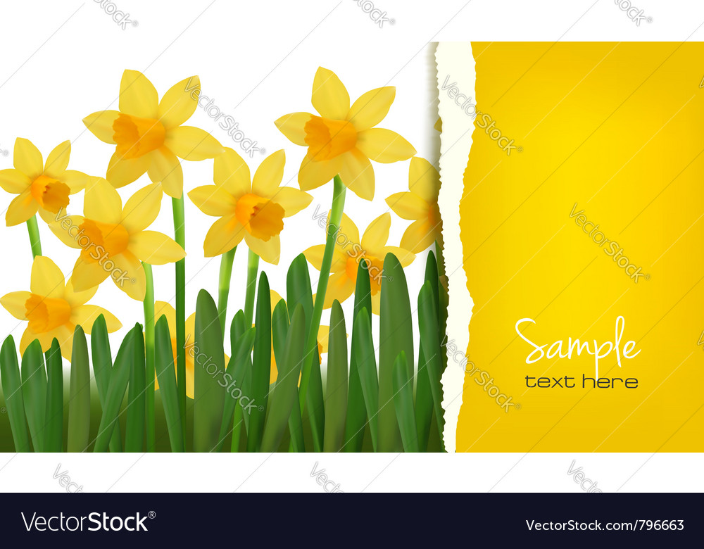 Daffodil card vector | Price: 1 Credit (USD $1)