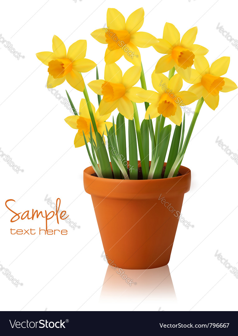 Daffodil flower background vector | Price: 1 Credit (USD $1)