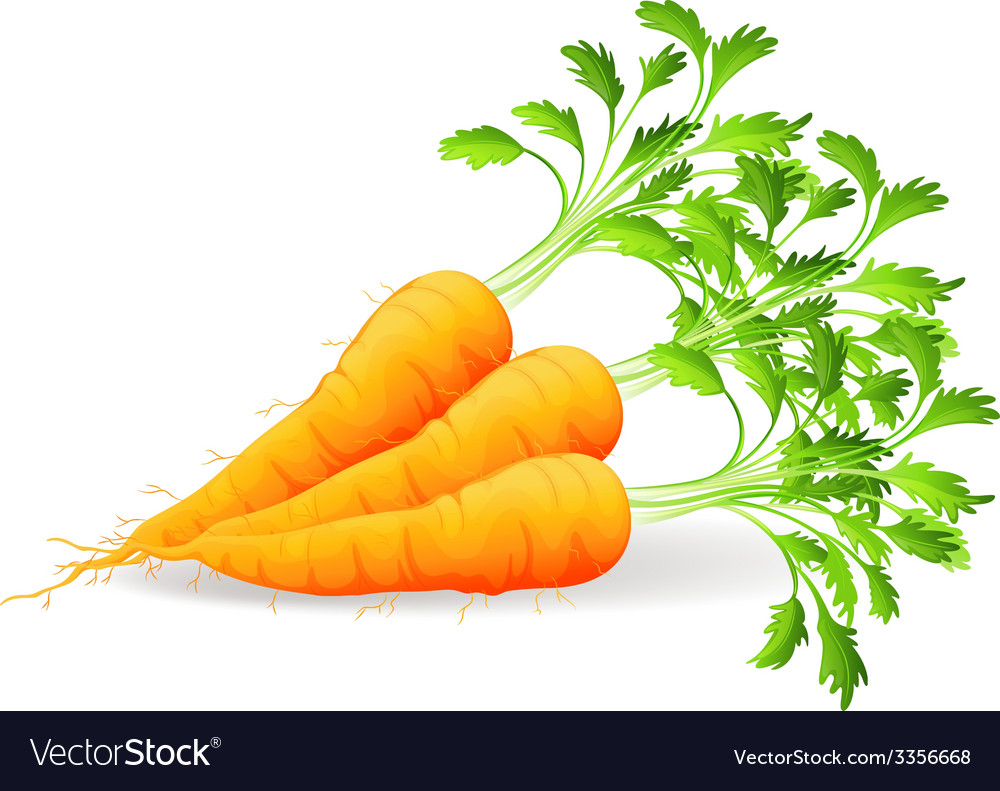 Nutritious carrots vector | Price: 1 Credit (USD $1)