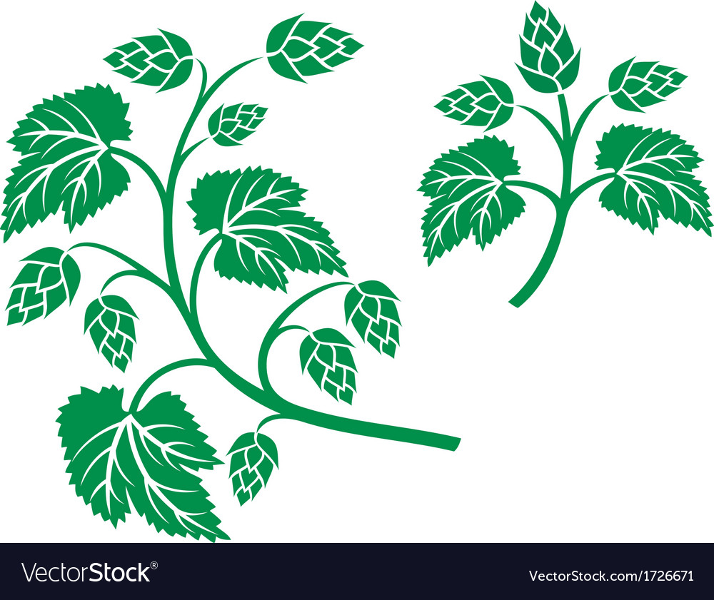 Hops leaf design vector | Price: 1 Credit (USD $1)