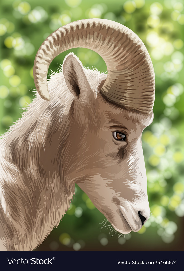 A wild goat vector | Price: 5 Credit (USD $5)