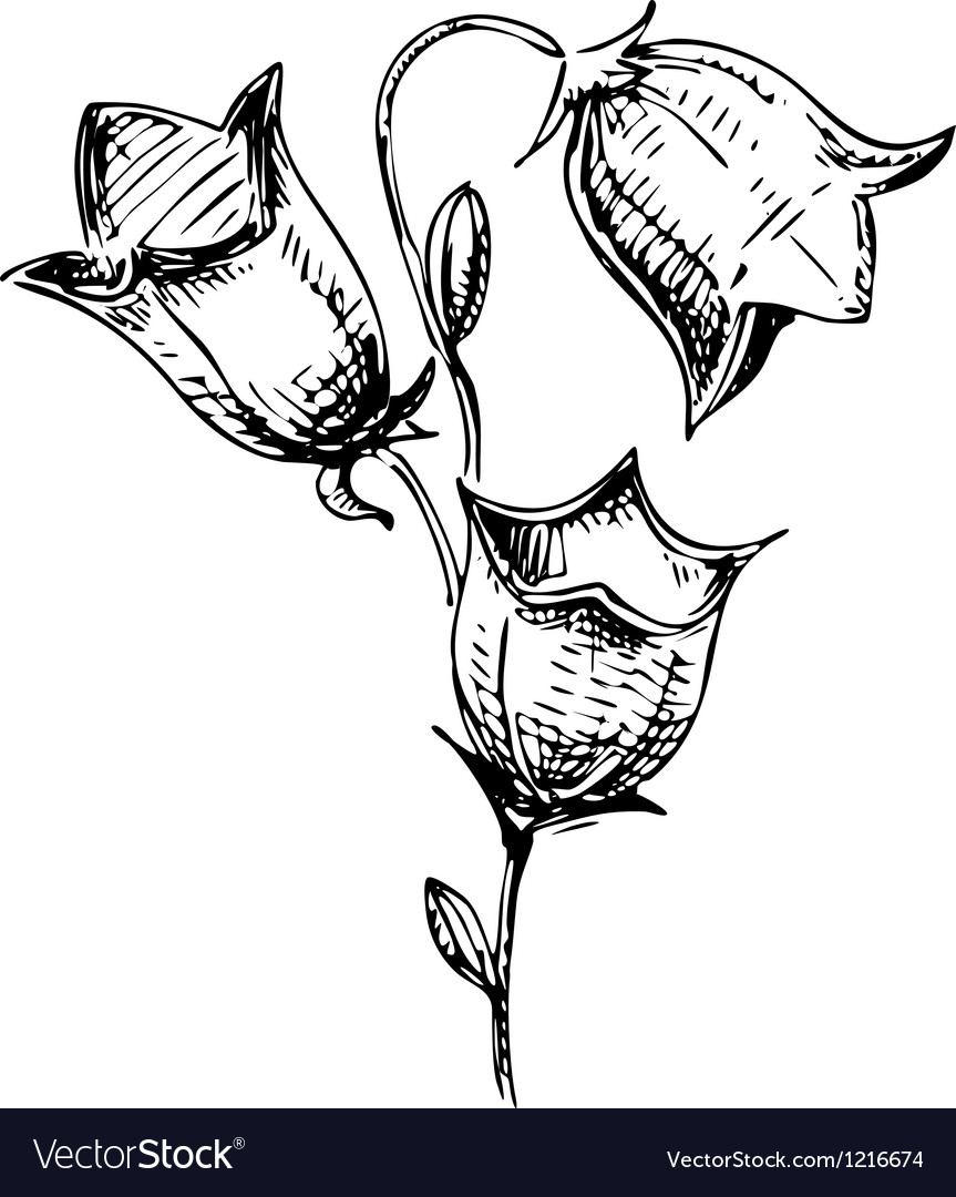 Bell flower sketch vector   Price: 1 Credit (USD $1)