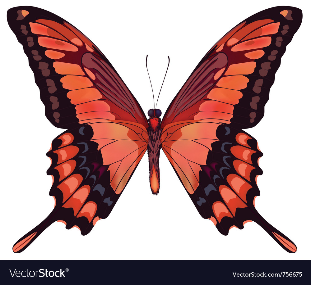 Beautiful isolated red butterfly vector | Price: 1 Credit (USD $1)