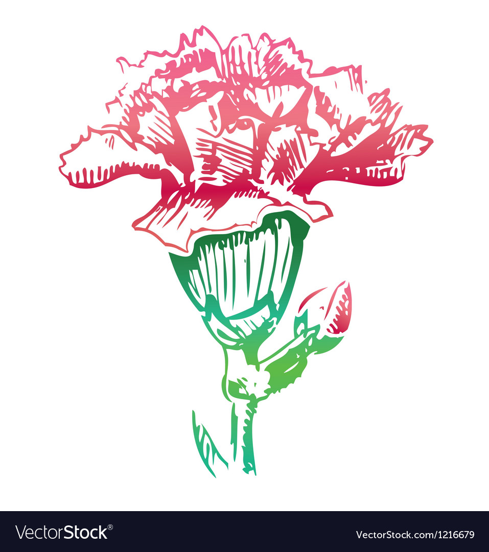 Pink carnation flower sketch icon vector | Price: 1 Credit (USD $1)