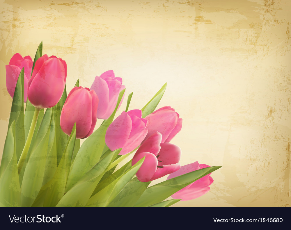 Valentines day background beautiful tulip flowers vector | Price: 1 Credit (USD $1)