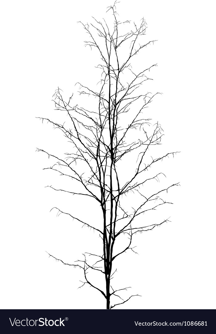 Leafless tree vector | Price: 1 Credit (USD $1)