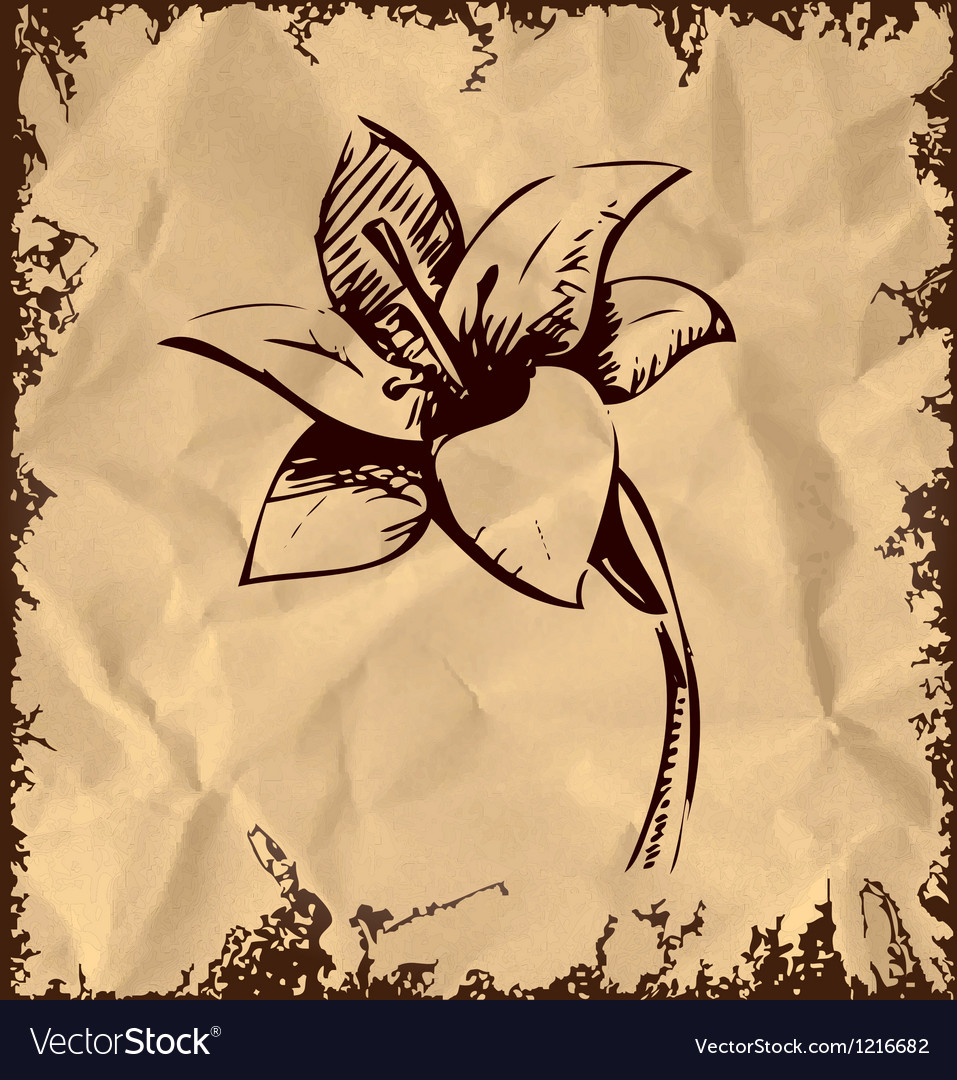 Lily flower sketch vector | Price: 1 Credit (USD $1)