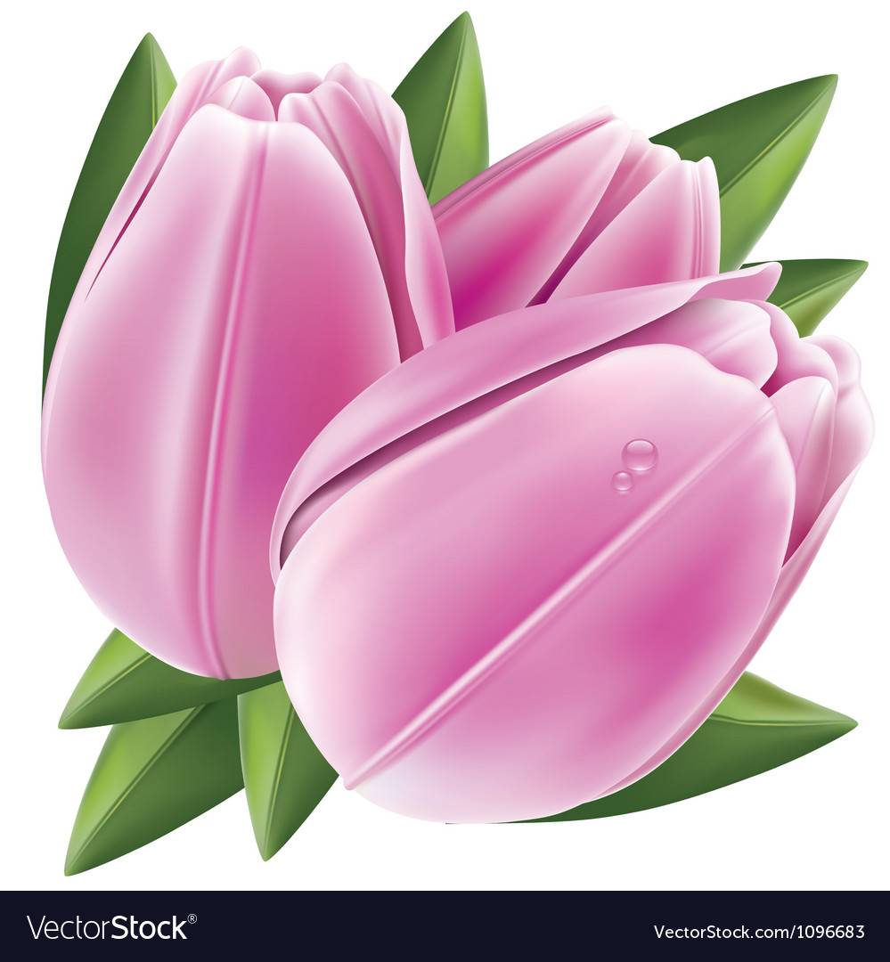 Tulip vector | Price: 3 Credit (USD $3)