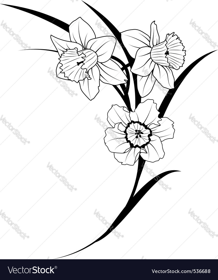 Narcissus flowers vector | Price: 1 Credit (USD $1)