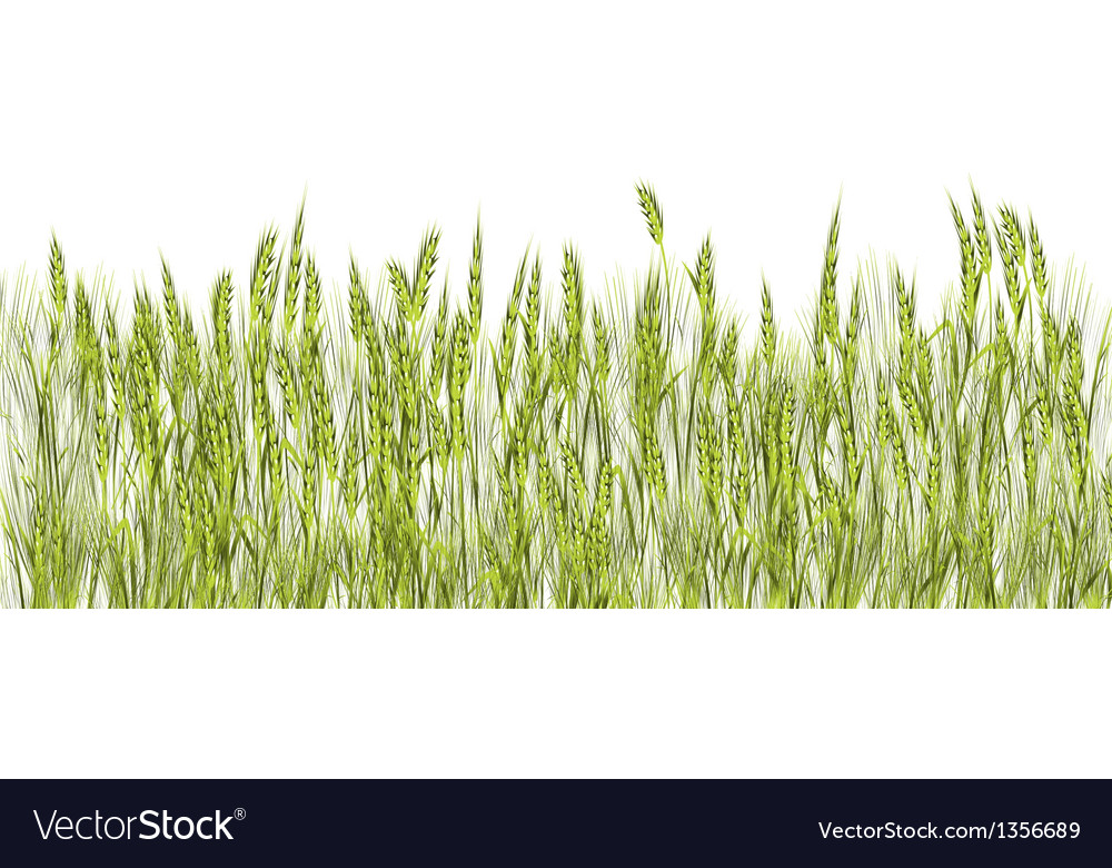 Green wheat vector | Price: 1 Credit (USD $1)