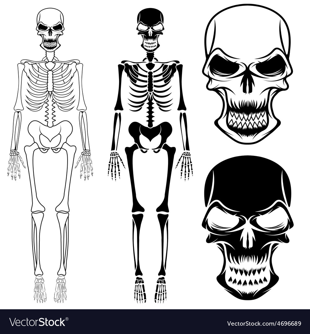 Set of skeletons and skulls vector | Price: 1 Credit (USD $1)
