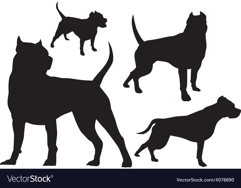 Amstaff silhouette logo vector | Price: 1 Credit (USD $1)