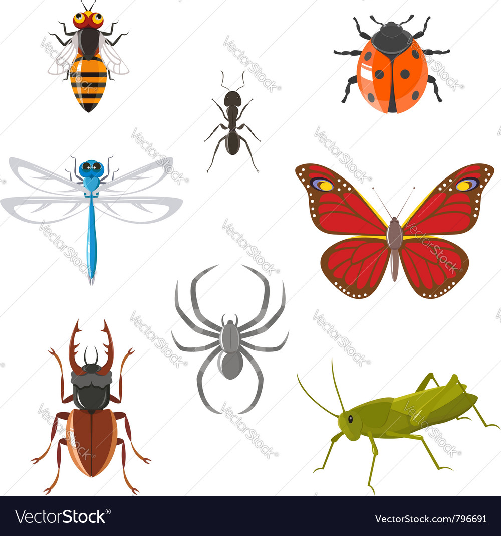 Insect icon set vector | Price:  Credit (USD $)